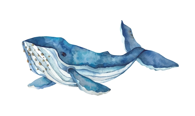 Watercolor hand-drawn blue whale.