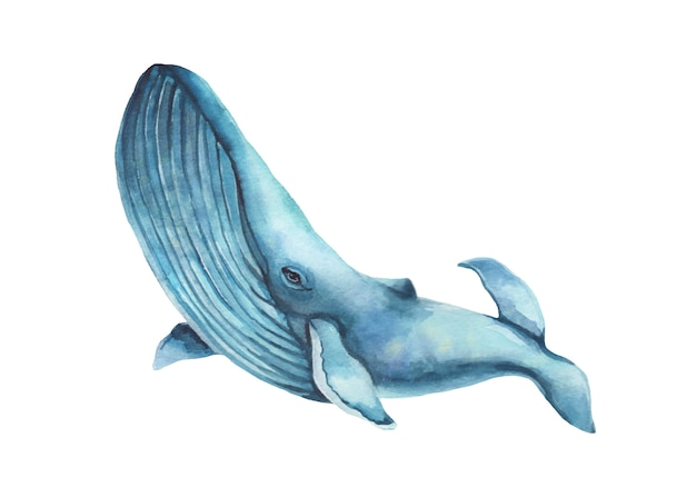 Watercolor hand-drawn humpback whale illustration - jumping up.