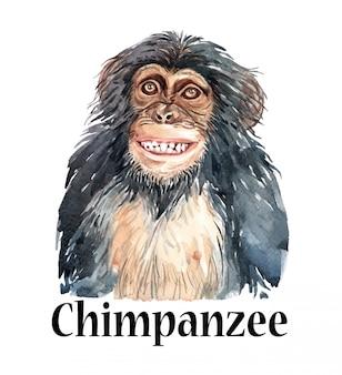 Watercolor hand drawn monkey chimpanzee smile.