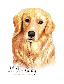 Watercolor hand-drawn portrait golden retriever dog
