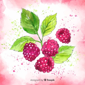 Watercolor hand drawn raspberry background