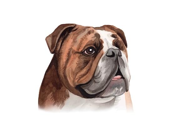 Watercolor hand painted bulldog