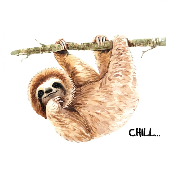Watercolor hand painted cute sloth.