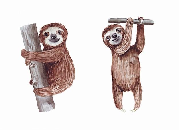 Акварель расписанные милые ленивцы, висящие на дереве. мультфильм маленький ребенок животное.