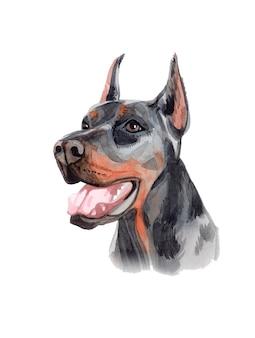 Акварель ручная роспись собака доберман иллюстрация