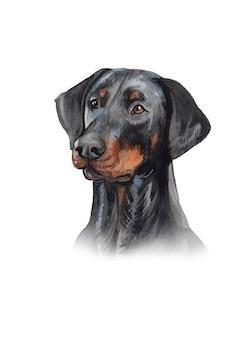 Акварель ручная роспись собаки доберман