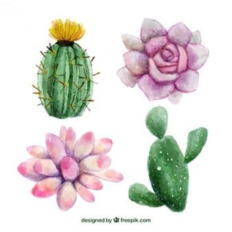 水彩手描きの花とサボテン