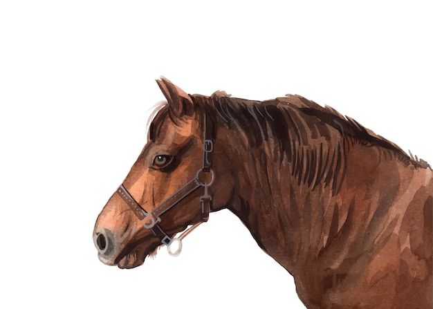 Watercolor hand painted horse