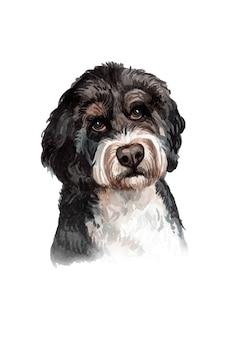 水彩の手描きのラブラドゥードル犬