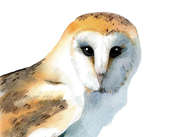 水彩の手描きのフクロウ