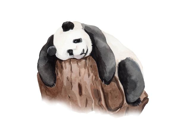 Watercolor hand painted panda bear illustration