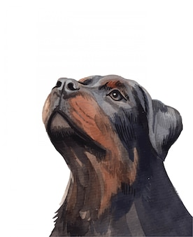 Watercolor hand painted rottweiler dog portrait illustration