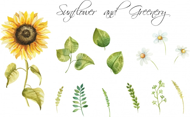 Watercolor hand painted sunflowers and leaves