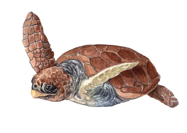 水彩手描き亀のイラスト