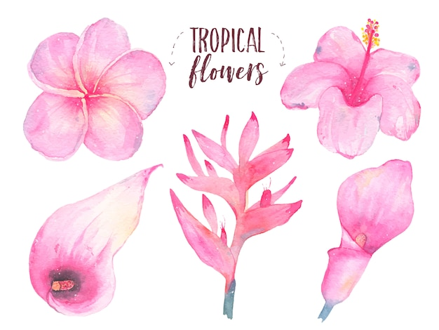 水彩の手描きの熱帯の花フランジパニハイビスカスオランダカイウユリセット白で隔離
