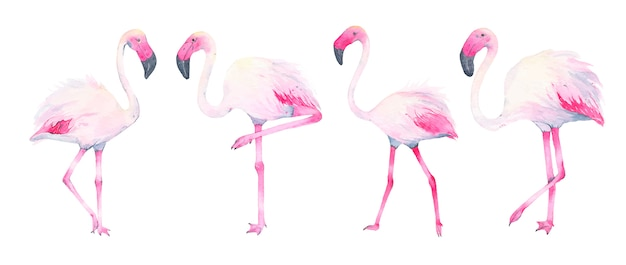 Watercolor hand painted tropical pink flamingo isolated on white