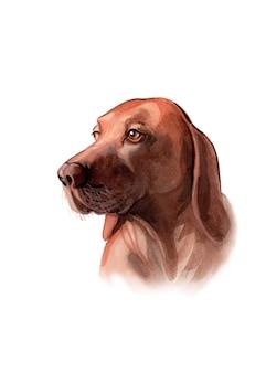 水彩の手描きのヴィズラ犬