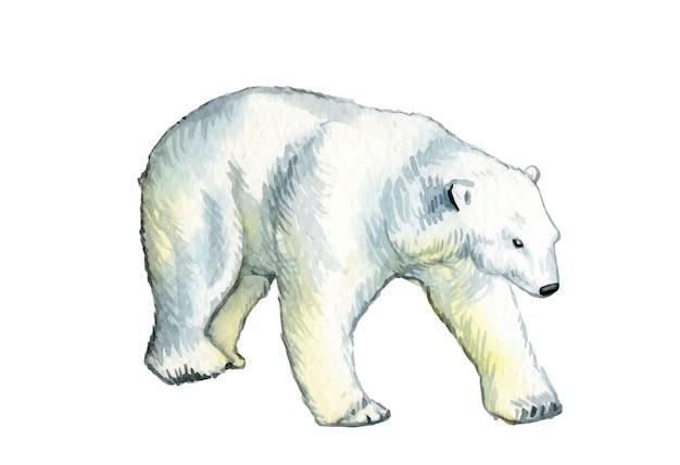 水彩手描きのクマ