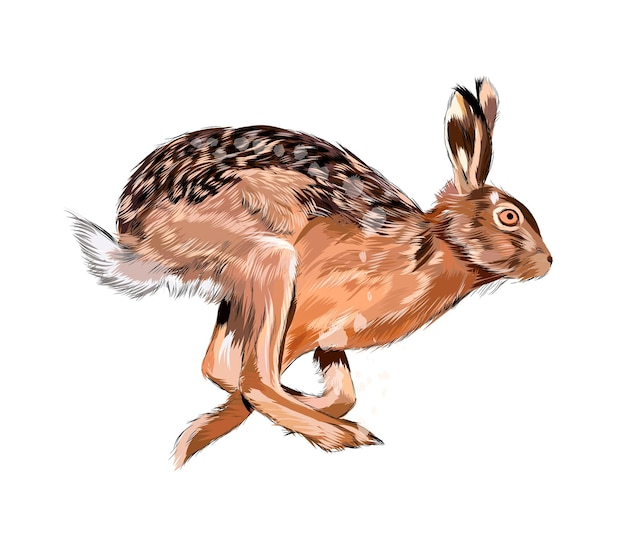 Watercolor hare, rabbit on white