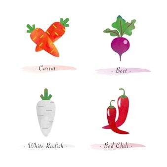 水彩健康有機植物野菜食品成分にんじんビート白大根赤唐辛子