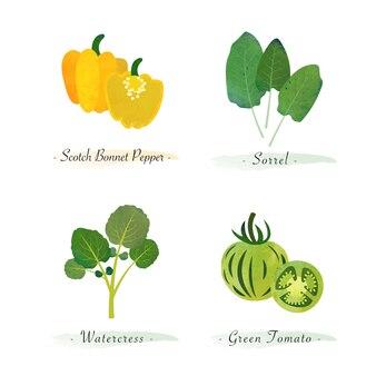 Акварель здоровое органическое растение овощной пищевой ингредиент скотч капот перец щавель кресс-салат зеленый помидор