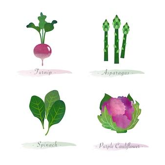 Акварель здоровое органическое растение растительный пищевой ингредиент репа спаржа шпинат фиолетовая цветная капуста