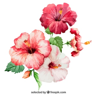 Watercolor hibiscus flowers