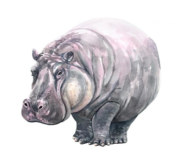 Watercolor hippopotamus illustration for printing.