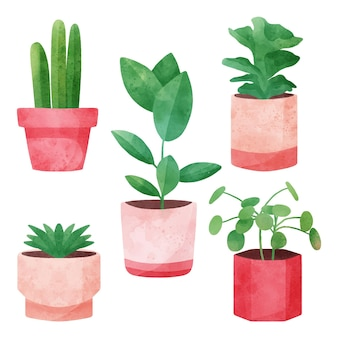 냄비에 수채화 houseplants 컬렉션 무료 벡터