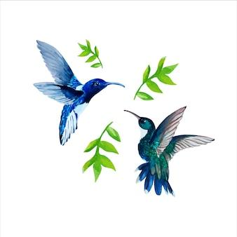 수채화 hummingbird(colibri)와 꽃 잎과 요소 세트