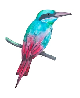 Watercolor illustration,  beautiful tropical bird.
