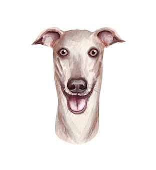 Watercolor illustration of a funny dog. popular dog breed. dog greyhound. hand made character isolated on white