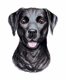 Watercolor illustration of a funny dog. popular dog breed. dog labrador retriever. hand made character isolated on white