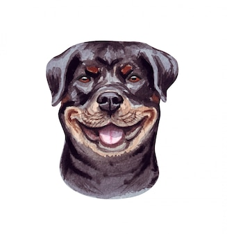 Watercolor illustration of a funny dog. popular dog breed. dog rottweiler. hand made character isolated on white