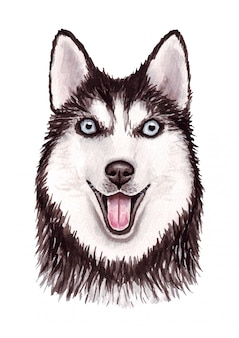 Watercolor illustration of a funny dog. popular dog breed. dog. siberian husky. hand made character isolated on white