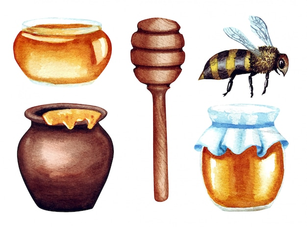 Watercolor illustration of honey in pot and jar, dropper, bee, isolated on white.