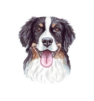 面白い犬の水彩イラスト。人気の犬種。バーニーズマウンテンドッグ。白で隔離される手作りの文字