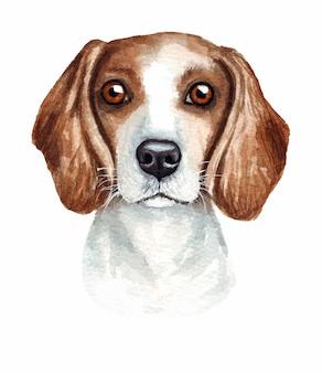 面白い犬の水彩イラスト。人気の犬種。犬ビーグル。シベリアンハスキー。白で隔離される手作りの文字