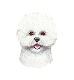 面白い犬の水彩イラスト。人気の犬種。犬ビションフリーゼ。白で隔離される手作りの文字