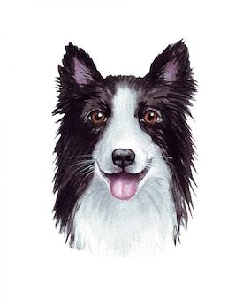 재미 있은 강아지의 수채화 그림입니다. 인기있는 개 품종. 개. 보더 콜리. 손으로 만든 문자 흰색 절연