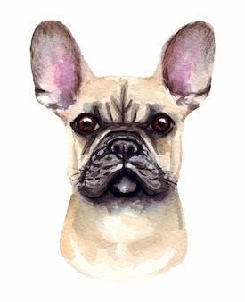 面白い犬の水彩イラスト。人気の犬種。犬のフレンチブルドッグ。白で隔離される手作りの文字