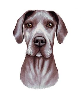 面白い犬の水彩イラスト。人気の犬種。犬。グレートデーン。白で隔離される手作りの文字