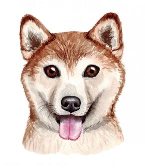 面白い犬の水彩イラスト。人気の犬種。犬。柴犬。白で隔離される手作りの文字