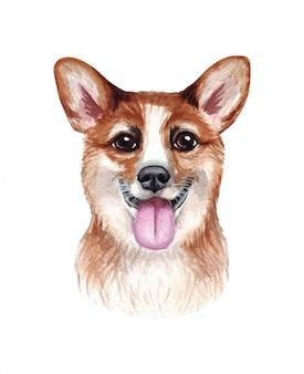 재미 있은 강아지의 수채화 그림입니다. 인기있는 개 품종. 개. 웨일즈 어 corgi. 손으로 만든 문자 흰색 절연