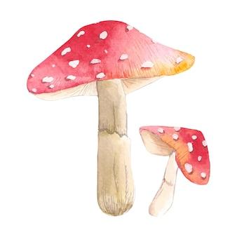 Акварельные иллюстрации набора красных грибов, нарисованных вручную акварельными красками