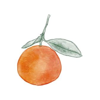 小枝に明るいオレンジ色の水彩イラスト。