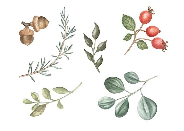 겨울 식물과 열매의 수채화 그림입니다. 크리스마스와 겨울 방학.