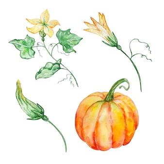 별도의 이미지 오렌지 호박과 노란색 꽃과 새싹과 녹색 잎 세 가지 수채화 그림 세트