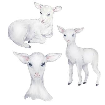 Набор акварельных иллюстраций белого ягненка, пасхальное изображение, портрет козы, тонкий элемент дизайна