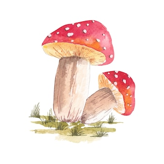 Watercolor illustration of a set of red mushrooms drawn by hand with watercolors
